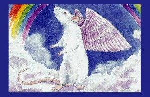 angel rat