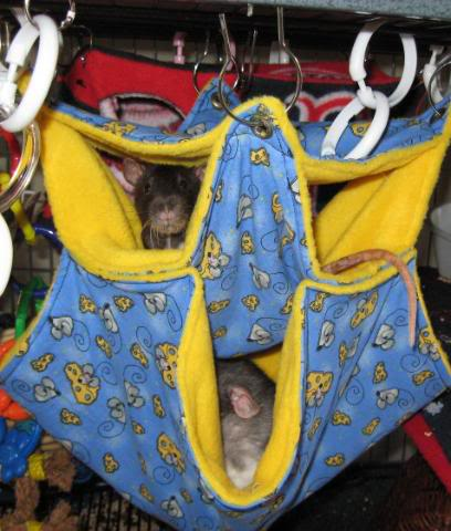 honey bs hammocks   mainely rat rescue the rat roost online retail shop  rh   mainelyratrescue org