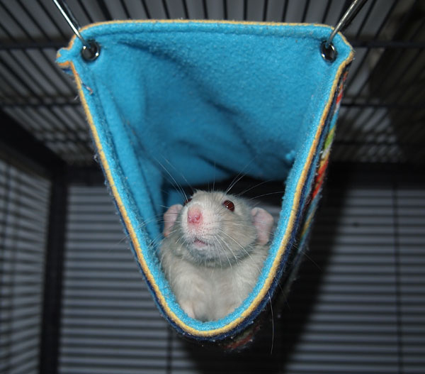 double deckers hammocks   mainely rat rescue the rat roost online retail shop  rh   mainelyratrescue org